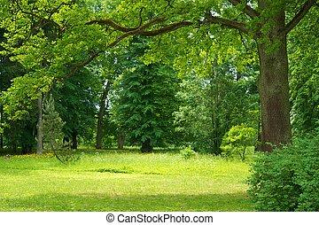 Krásná lesová krajina