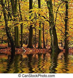 Krásná lesová krajina, podzimní podzimní podzimní podzimní podzimní se odrážela na vodě