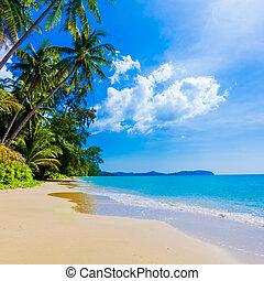 Krásná pláž a tropické moře