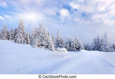 Krásná zimní krajina, pokrytá stromy.