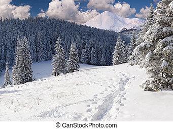 Krásná zimní krajina v horách