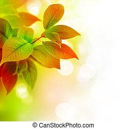 Krásné listí