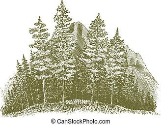 Kreslení na lesní hoře