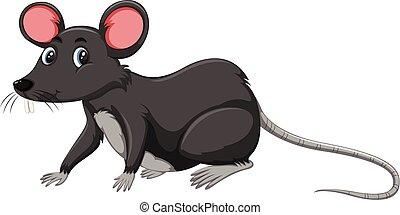 krysa, čerň, běloba grafické pozadí