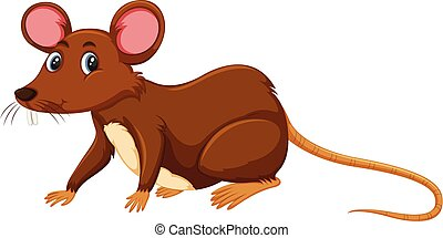 krysa, běloba grafické pozadí