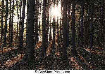 kufr, slunit se, strom, podzim, paprsek, les
