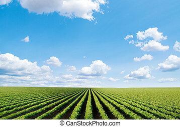 Kultivované pole