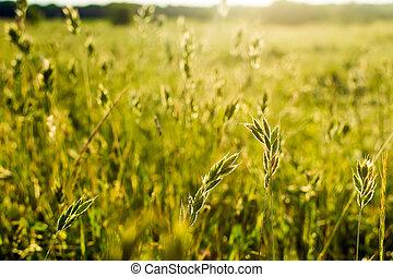 Kvítající se trávník