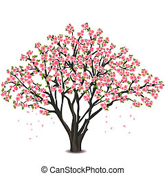 květ, třešeň, nad, strom, japonština, neposkvrněný