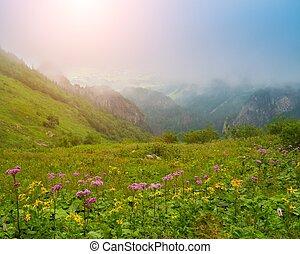 Květiny proti krásným horským pohledům