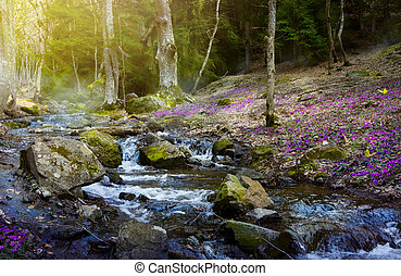 Kvetoucí les, horská horečka a jarní květiny