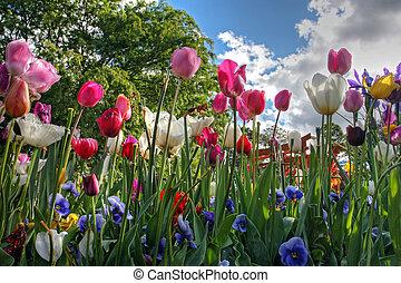 Kytky na jaře