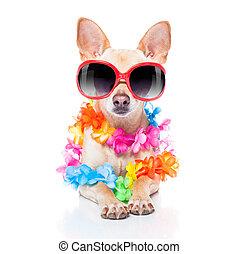 léto, pes, prázdniny