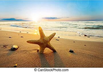 léto, pláž, jasný, hvězdice
