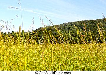 Landscape s polem a horami