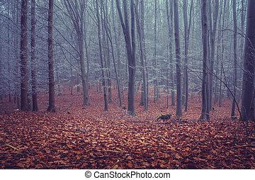 les, klesání, mlha, list, pokrytý, červeň, dub, pozemek