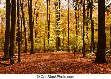 les, krajina, podzim