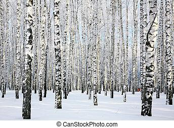 les, leden, jasný, zima, bříza