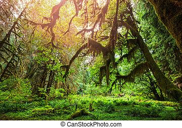 les, nezkušený