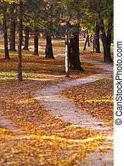 les, podzim, cesta