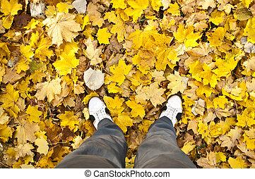 les, podzim, chůze