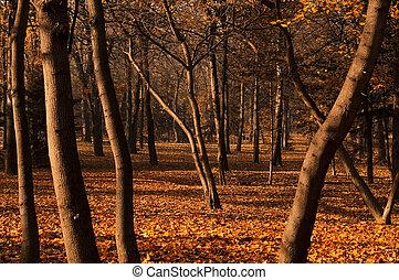 les, podzim