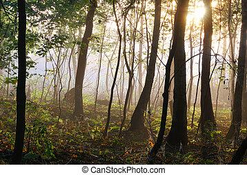 les, ráno