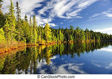 Les se odráží v jezeře