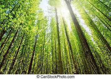 les, sluneční světlo