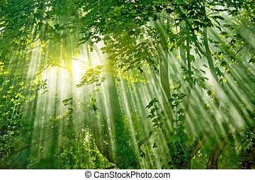 les, sunlights, kouzelnictví