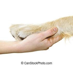 Lidská ruka držící psí tlapu