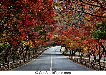 listoví, cesta, podzim