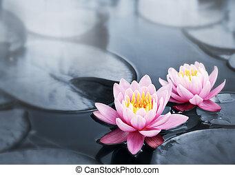 Lotusy
