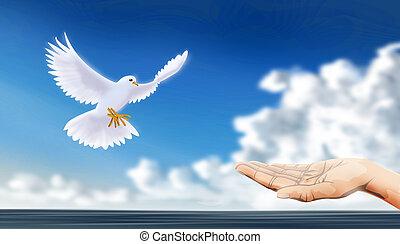 Mírová holubice