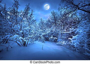 Měsíční noc v zimním lese