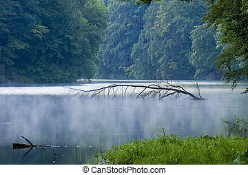 maďarsko, obrazný, strom, jezero, klidný, namočit, bystrý, venku, nechat na holičkách, mír, abstraktní, impassable, divadelní, jasný, druh, bujný, den, grafické pozadí, listoví, mlha, nezkušený, pramen, větvit, kouzelnictví, blbeček, organický, řeka, prostředí, nárůst, čistit, sluneční světlo, ...