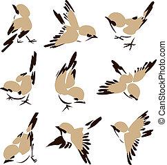 Malá ptačí ilustrace