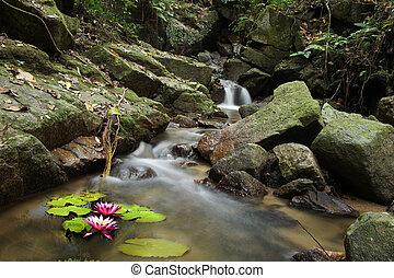 Malá voda lilie a vodopád v lese.