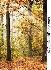 min.čas i příč.min. od light, paprsek, slunit se, mýtina, autumn les