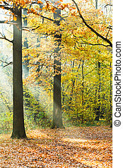 min.čas i příč.min. od light, trávník, paprsek, slunit se, autumn les