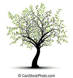 mladický neposkvrněný, vektor, strom, grafické pozadí