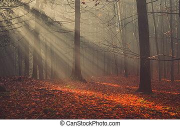 mlha, barvitý, paprsek, slunit se, list, les, podzim