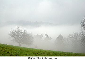mlha, kopyto