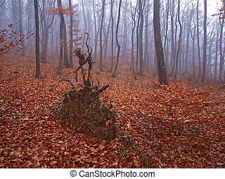 mlha, počasí, autumn les