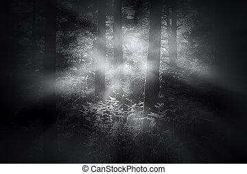 mlhavý, rozednívat se, les