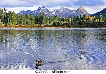 molas, divokost, kolorado, jehlička, jezero, weminuche, hory