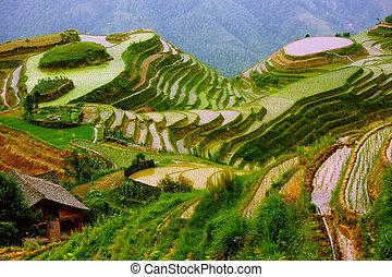 montáž podkladů, yunnan, rýže, čína, uspořádat terasovitě