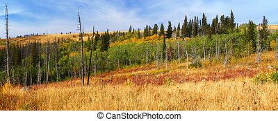 Montana podzimní scestí