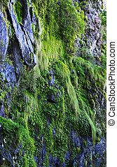 Moss a kytky na útesu