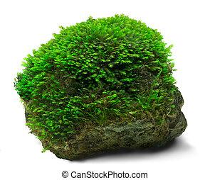 Moss a rock